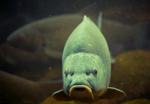 Durbuy Fish