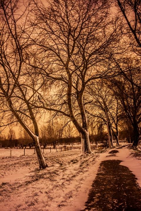 Schnee03