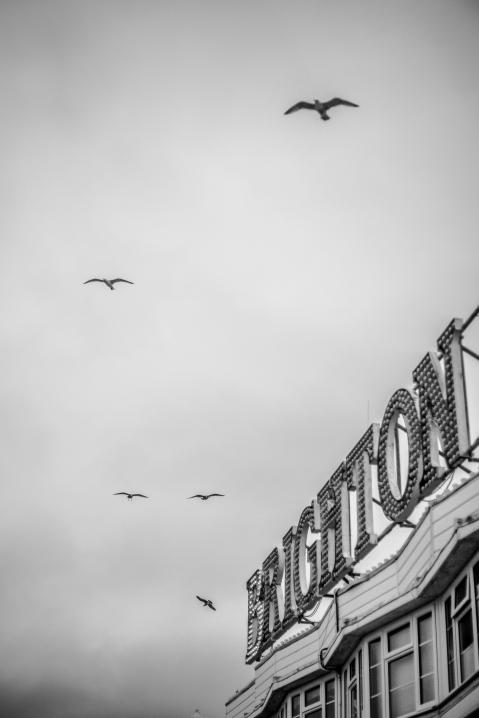 Brighton00040